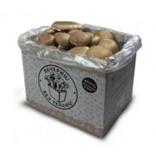Грибна коробка для вирощування (печериць королівських)